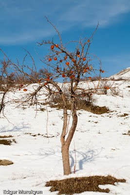 Սառած Խնձոր, Մաճառ, Ձյուն,